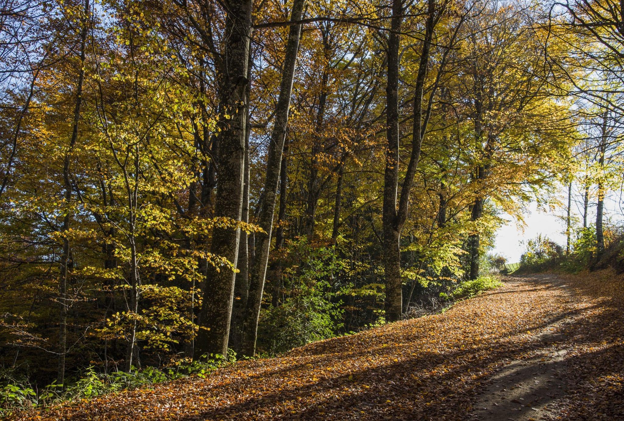 chemin promenade