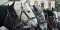 Le Mêle sur Sarthe Village étape